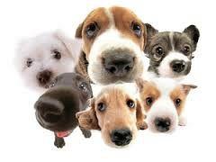 canini gruppo